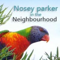 parrot150 (2)