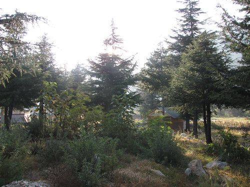 Deodar Forest in Harsil