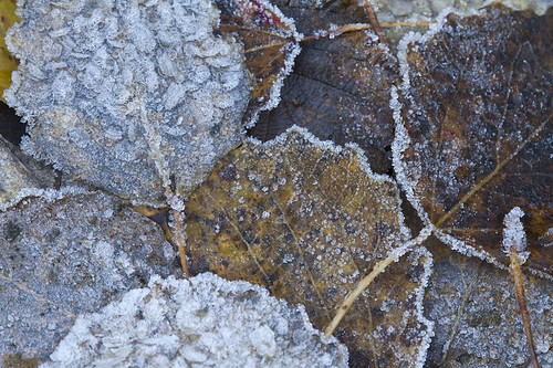 """frosty leaves • <a style=""""font-size:0.8em;"""" href=""""http://www.flickr.com/photos/22289452@N07/6341004803/"""" target=""""_blank"""">View on Flickr</a>"""