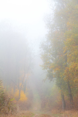 """fog in forest • <a style=""""font-size:0.8em;"""" href=""""http://www.flickr.com/photos/22289452@N07/6302062869/"""" target=""""_blank"""">View on Flickr</a>"""