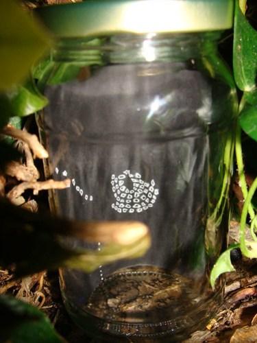Jar No 266 front