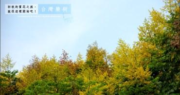 旅行︱入秋的賞花首部曲~金黃小花、粉嫩燈籠.台灣欒樹