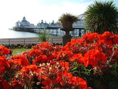 "Red Flowers Pier • <a style=""font-size:0.8em;"" href=""http://www.flickr.com/photos/59278968@N07/6326192428/"" target=""_blank"">View on Flickr</a>"