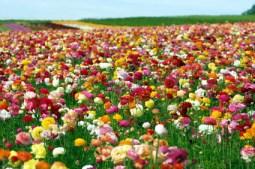 self pollinating flowers