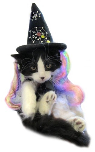 Kitten witchiepoo_3560