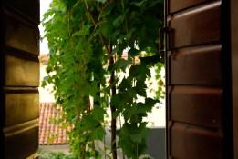 Reader I.F. | Petrovac, Montenegro | 10:35am