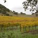 Yountville Vineyards