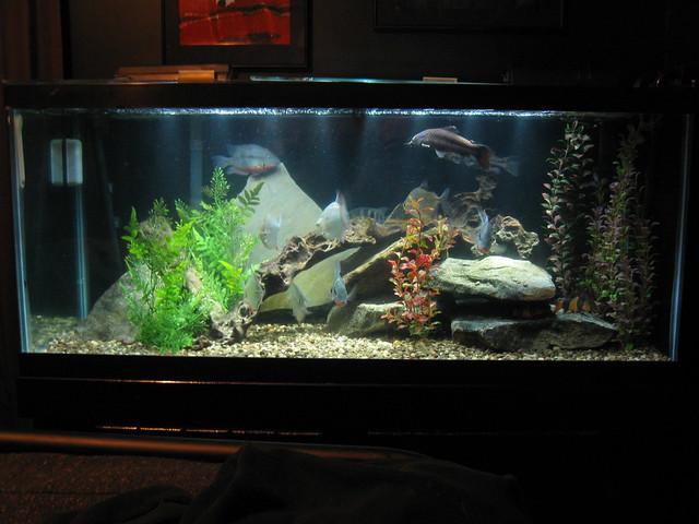 75 Gallon Freshwater Aquarium   Flickr   Photo Sharing!