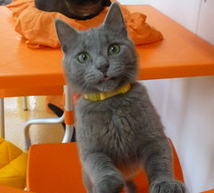 "Walter • <a style=""font-size:0.8em;"" href=""http://www.flickr.com/photos/72892197@N03/8732613253/"" target=""_blank"">View on Flickr</a>"