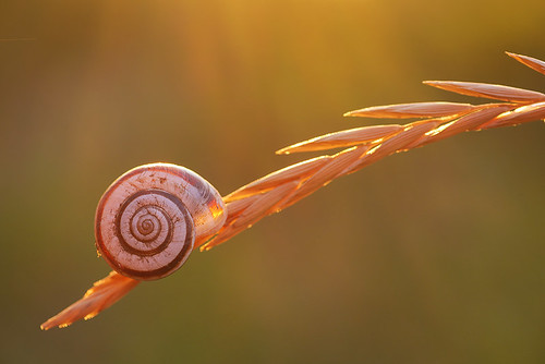 """Snail on a blade of grass • <a style=""""font-size:0.8em;"""" href=""""http://www.flickr.com/photos/22289452@N07/9538385629/"""" target=""""_blank"""">View on Flickr</a>"""