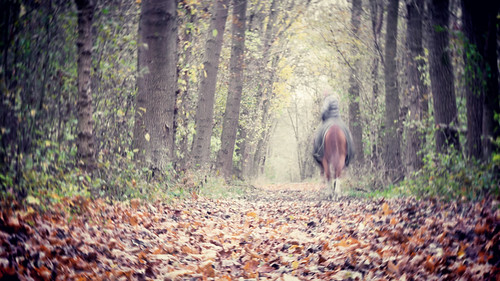 """A rider in autumn • <a style=""""font-size:0.8em;"""" href=""""http://www.flickr.com/photos/22289452@N07/15793695875/"""" target=""""_blank"""">View on Flickr</a>"""