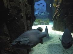 Poisson peu commodes Aquarium Lisbonne
