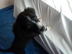 Diablo Puppy 6