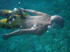 Jay Swimming