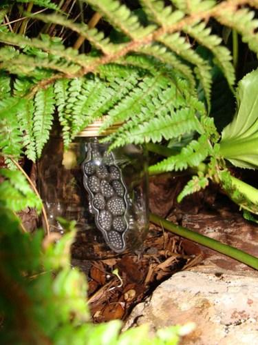Jar No 336 in situ