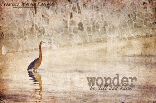 Wonder by Francesca Watson Designs
