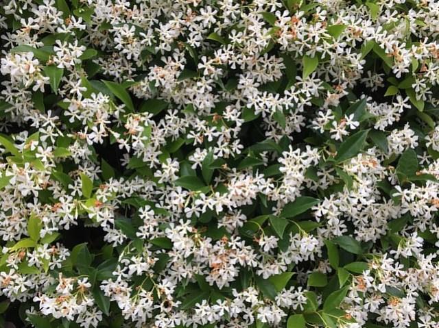 100daysflowers05