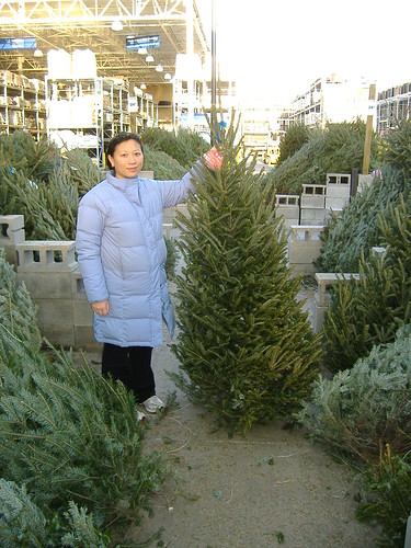 Danielle selects our tree