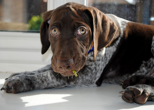 An old puppy pic of Bert por Aighton