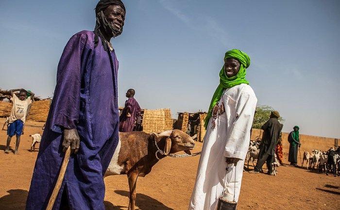 Portrait of a life of theTuareg shepherd to the market of Gorom Gorom goats, Sahel, northern Burkina Faso