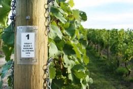 Tantalus Vineyards_Old Vines Riesling Post