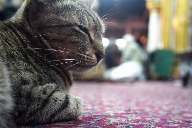 Mission Delhi – Billi, Hazrat Nizamuddin Dargah