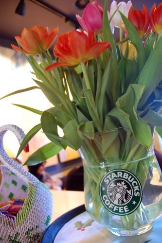 Flowers in Starbucks vase