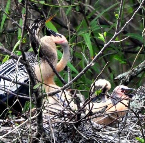 C'mon Momma! Just One Kiss! Shark Valley, Everglades National Park, Fla., Feb. 27, 2012