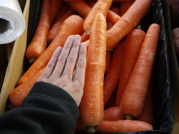 giant carrots (with my hand as a reference)