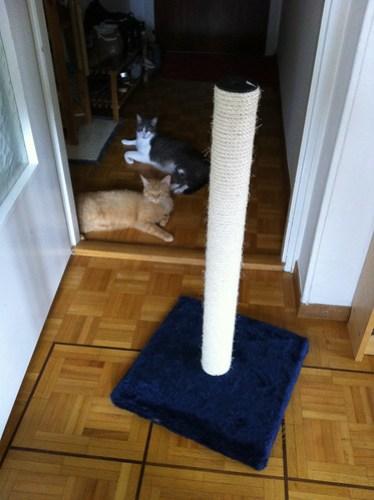 New Cats 223.jpg