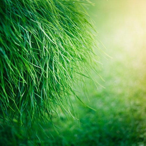 Grass Texture by ►CubaGallery