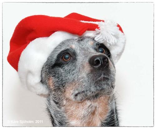 111222 Christmas portrait