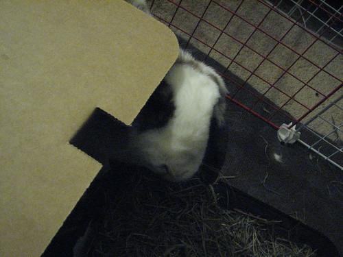 betsy around the corner of the box