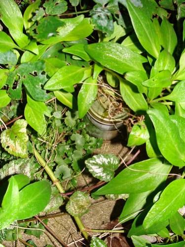 Jar No 330 in situ 01