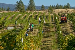 Meyer Family Vineyards | Photo: Henry Georgi