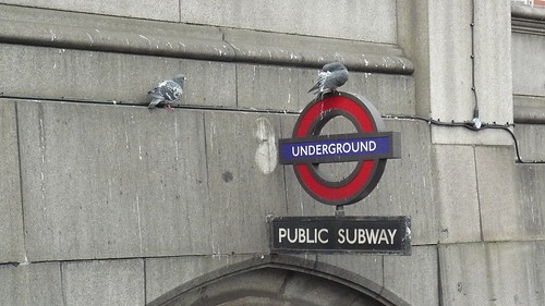 Pigeons at the Underground