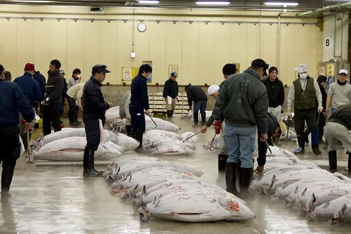 Tuna Auction - Examination Phase