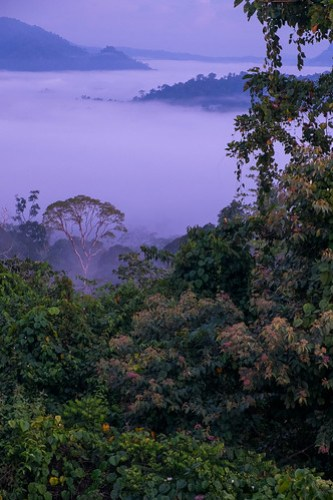 Jungle dawn. Danum Valley