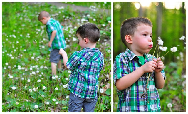 Dandelion Collage Tip Post