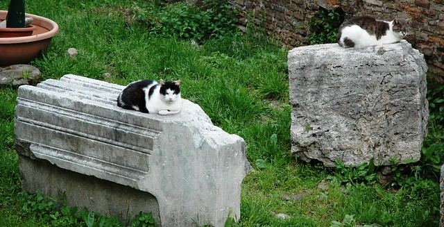 Cats among the ruins, Torre Argentina cat sanctuary, Rome