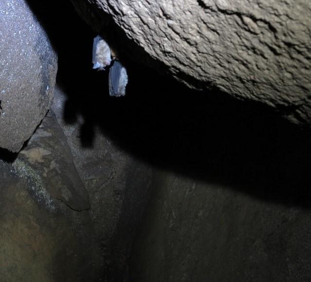 Inside Gobholo Cave