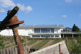 L vineyard 2011 106