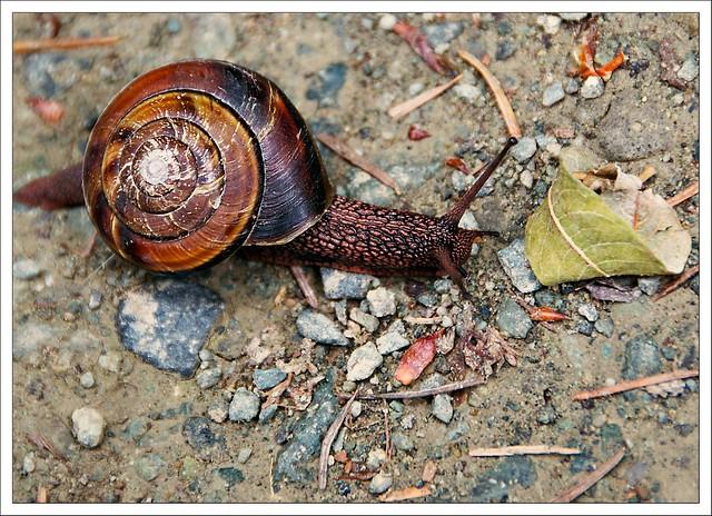 (206/366) Snail's Pace