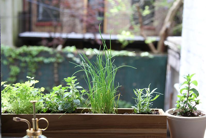 shade herbs
