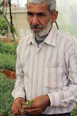 za'atar grower