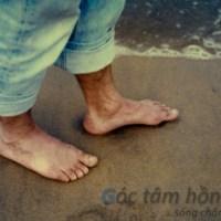 Dạo bước qua cuộc đời