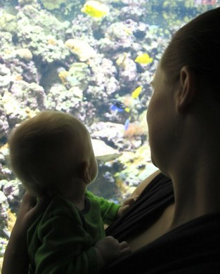 Evan's First Pittsburgh Zoo Visit