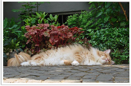 Frühjahrsmüdgkeit - spring fatigue