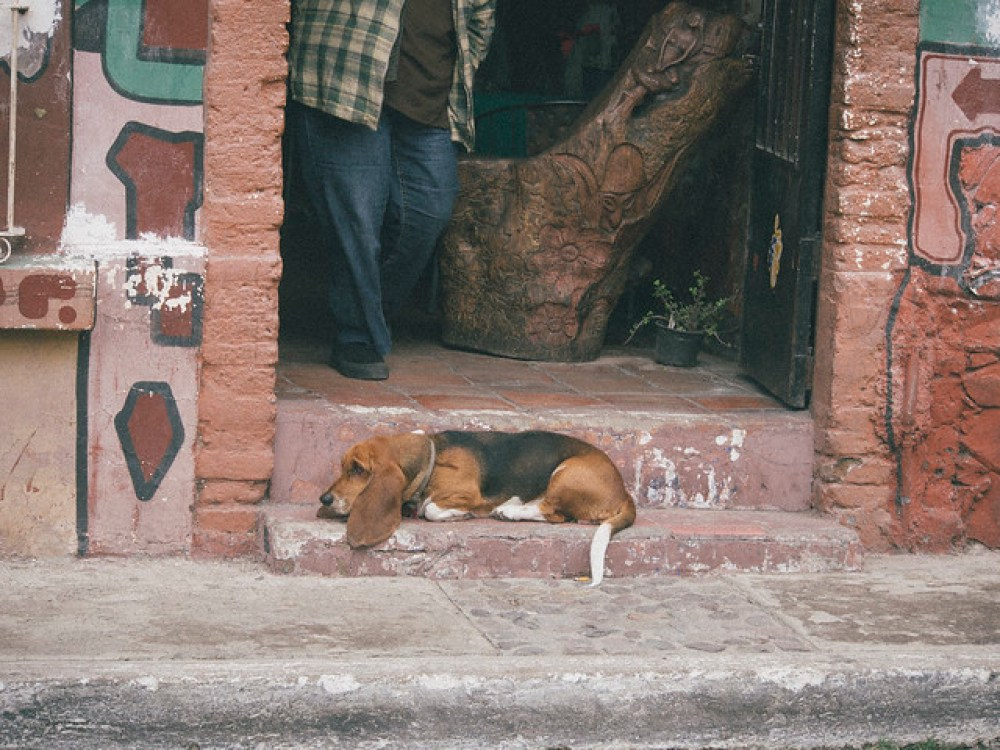 Hound dog in Ajijic