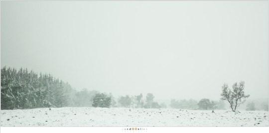 Sneeuwbui op de Stippelberg